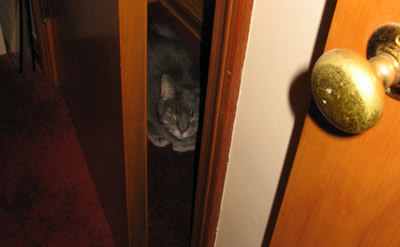 Clyde in the Office Closet