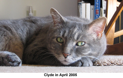 Clyde at 15 years