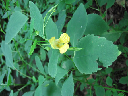 107-flowers