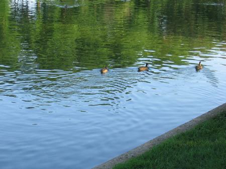 169-ducks.jpg