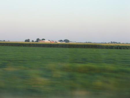 175-fields.jpg
