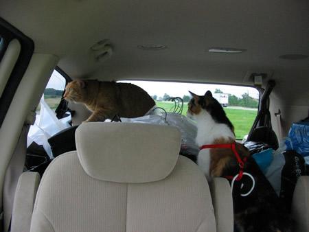 21-kitties-exploring