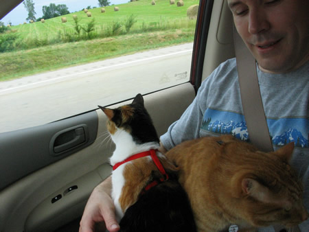 22-both-cats-on-david