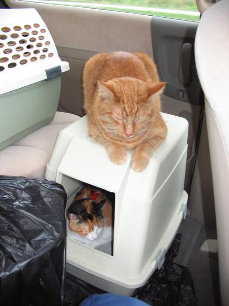 36-cats-sleeping-double-decker
